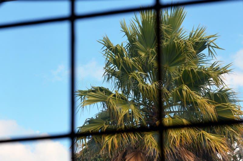 Тропическая тюрьма стоковое фото rf