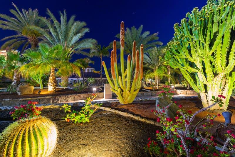 Тропическая флора Gran Canaria стоковое фото rf