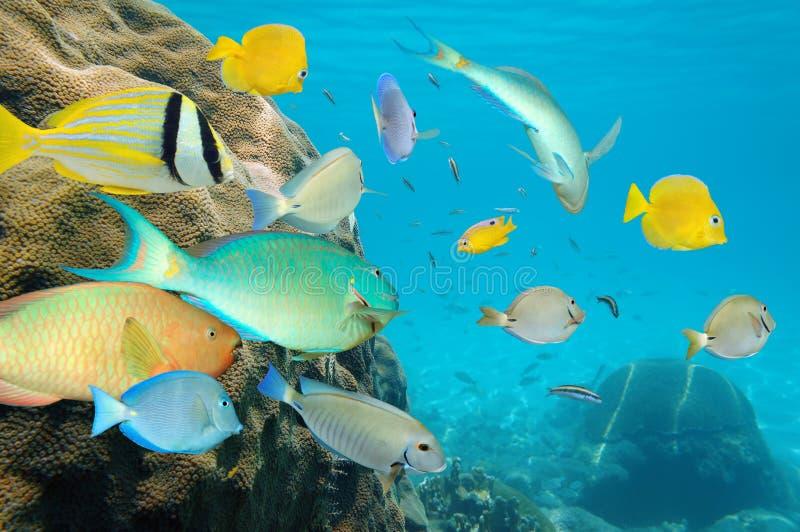 Тропическая школа рыб в коралловом рифе стоковое фото