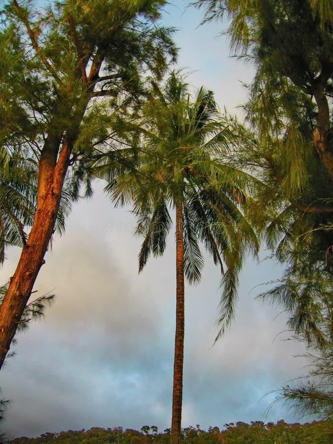 Тропические ладони стоковая фотография rf