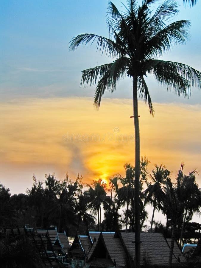 Тропические ладони стоковые фото