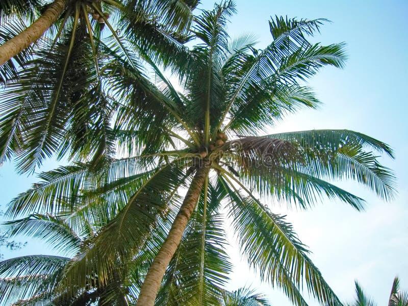 Тропические ладони стоковое фото rf