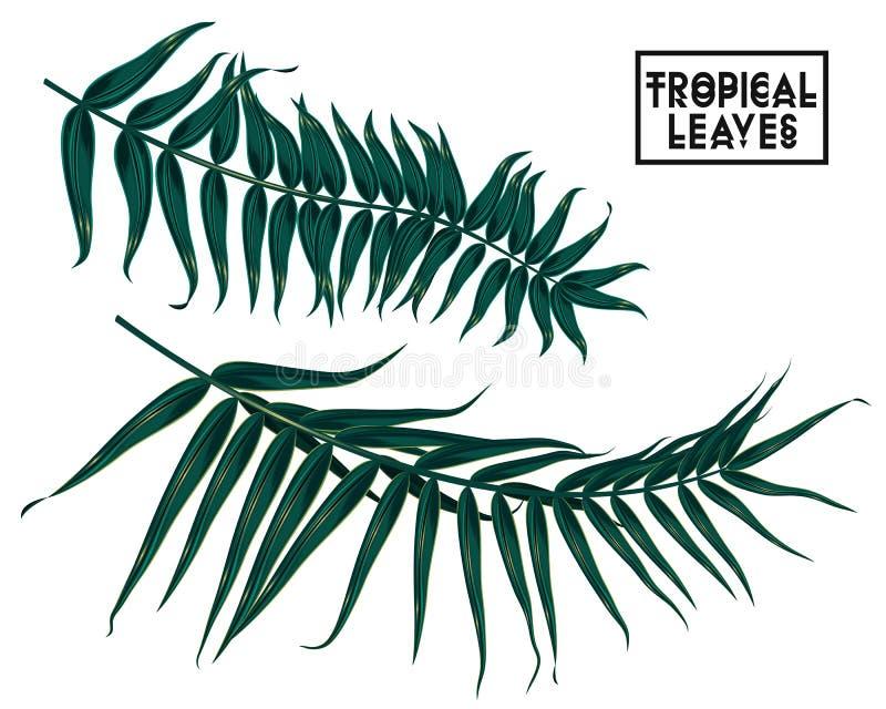 Тропические ветви, листья на белой предпосылке, изолированные листья пальмы бесплатная иллюстрация