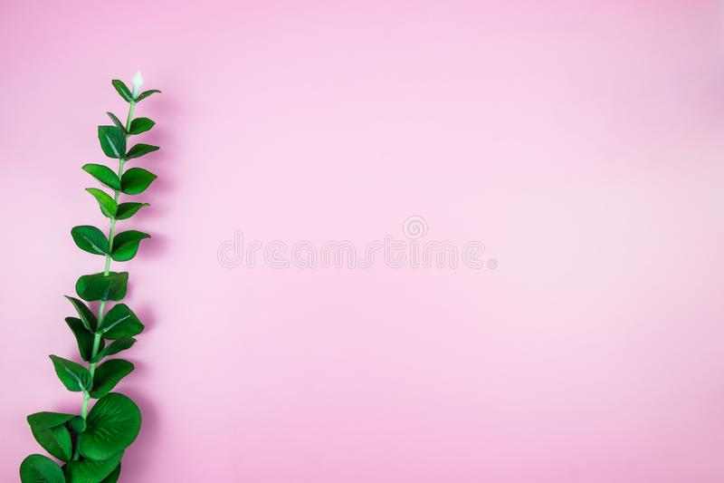 Тропические джунгли разветвляют листья Monstera на розовом ба пастельного цвета стоковое изображение
