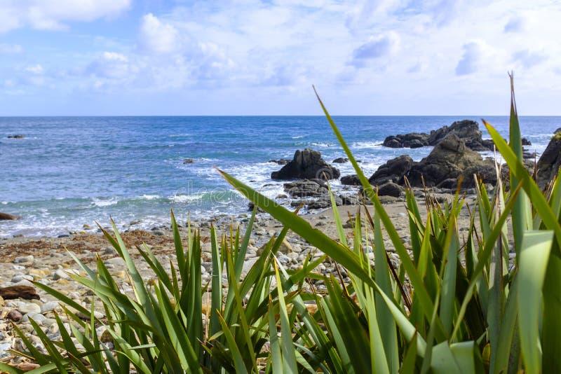 Тропические заводы пляжем стоковые изображения