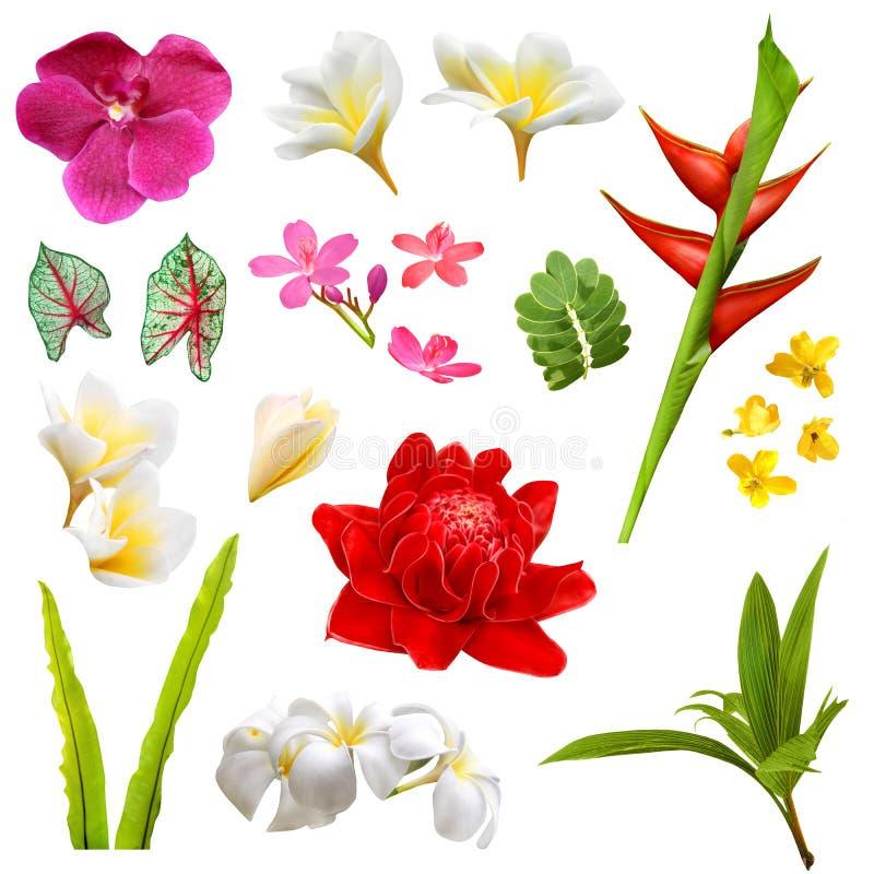 тропические заводы, листья и цветки стоковое изображение