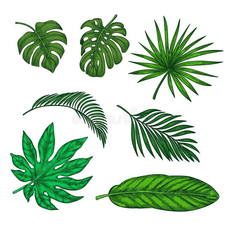 Тропические зеленые листья ладони устанавливают, vector иллюстрацию эскиза Вручите элементы вычерченной троповой природы и флорис иллюстрация вектора