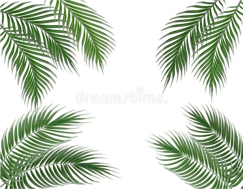 Тропические зеленые листья ладони на 4 сторонах Комплект белизна изолированная предпосылкой иллюстрация иллюстрация штока