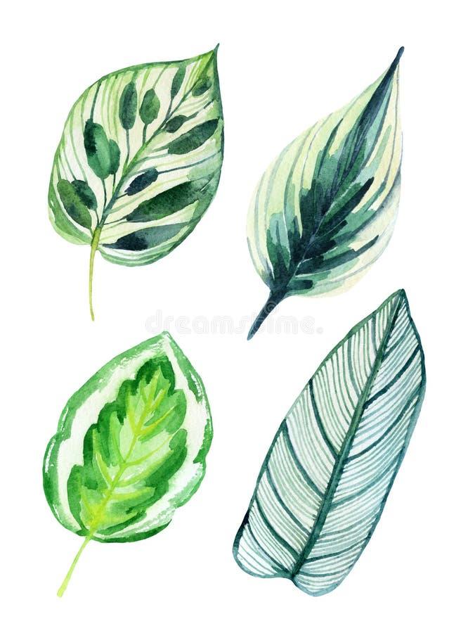 Тропические листья изолированные на белизне иллюстрация штока