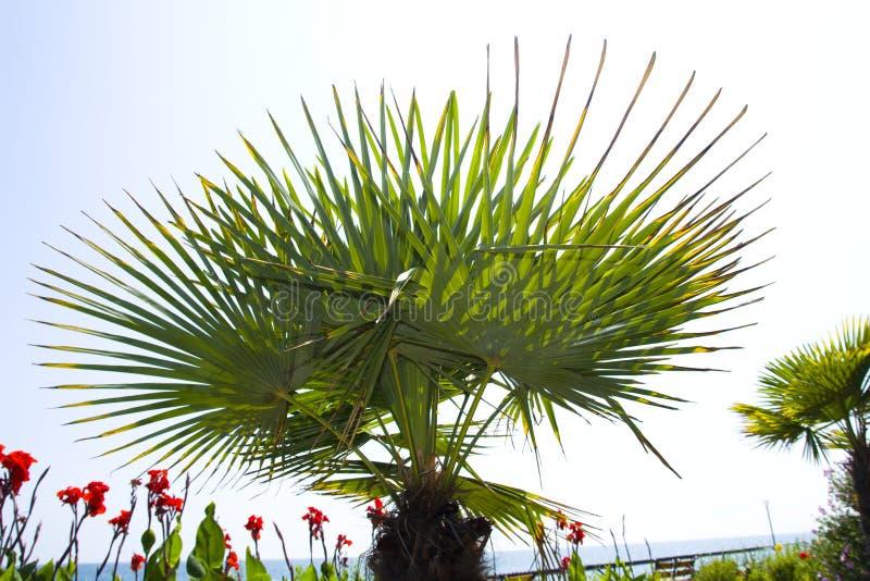Тропические лист - предпосылка природы стоковая фотография