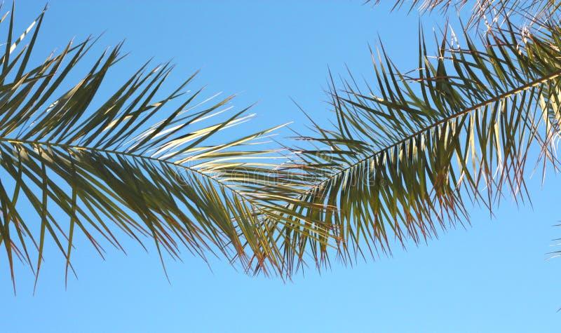 Тропические лист - предпосылка природы стоковые фотографии rf