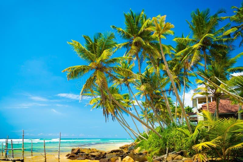 Тропические каникулы к Шри-Ланка стоковое изображение