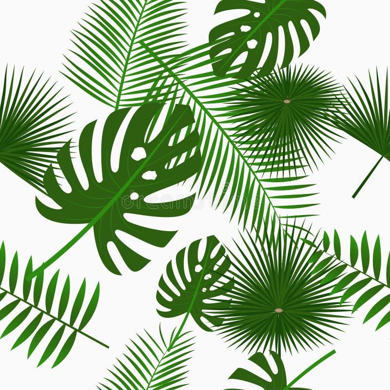 Тропические листья ладони безшовная картина, предпосылка с лист джунглей Фон с экзотическими заводами вектор иллюстрация штока