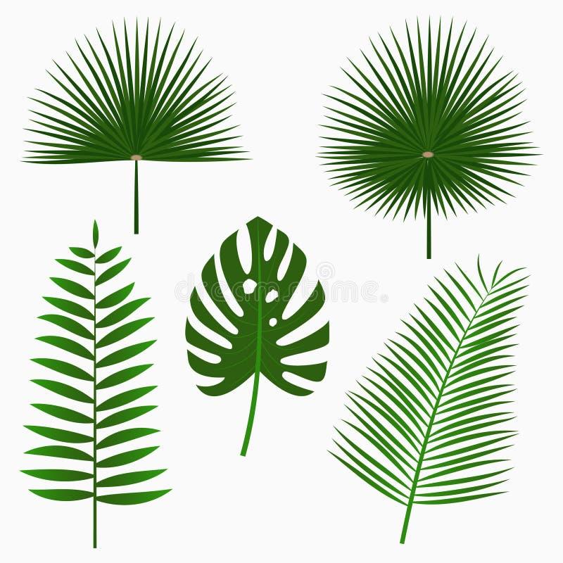 Тропические листья ладони, комплект лист джунглей изолированный на белой предпосылке экзотические заводы вектор иллюстрация штока
