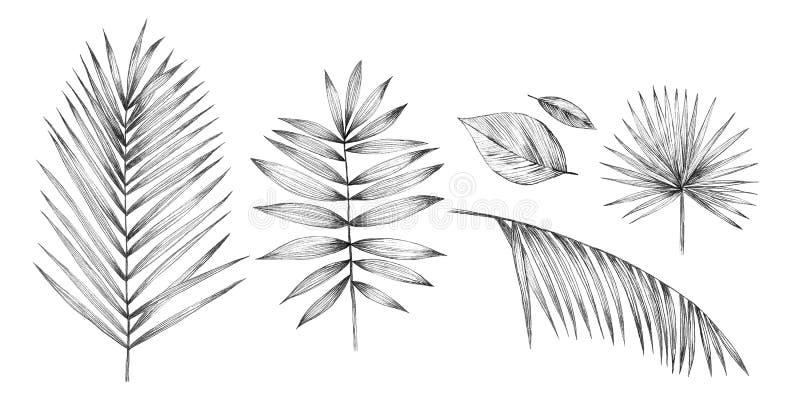 Тропические листья ладони на белой предпосылке Чертеж карандаша руки иллюстрация вектора