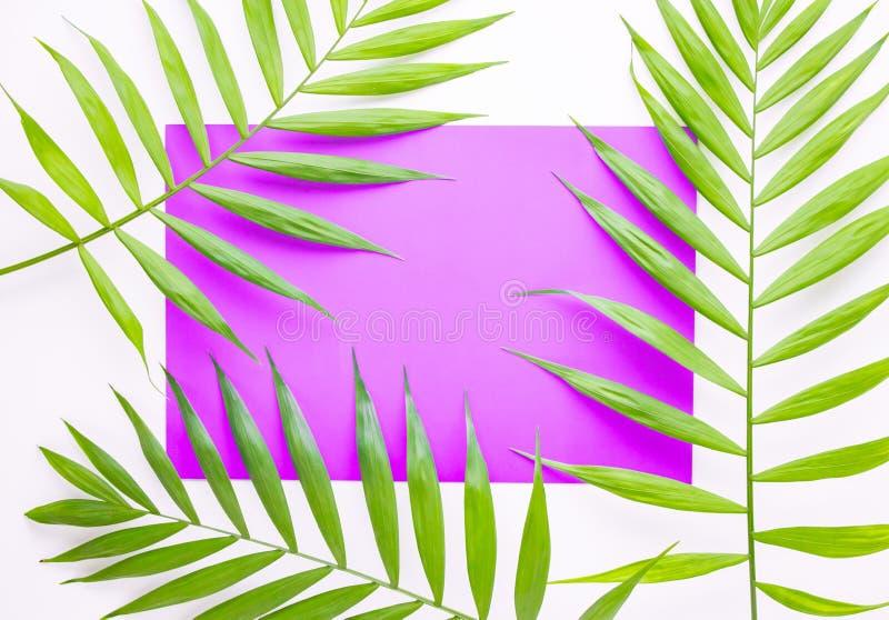 Тропические листья ладони на сирени и пурпурной предпосылке Минимальная концепция Лето в стиле Лист ладони Тропические заводы r стоковое изображение rf