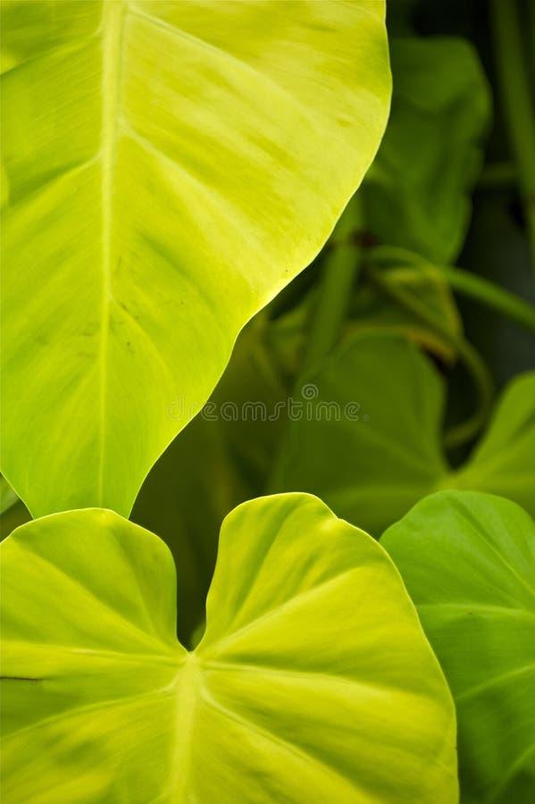 Тропические листья стоковые изображения rf