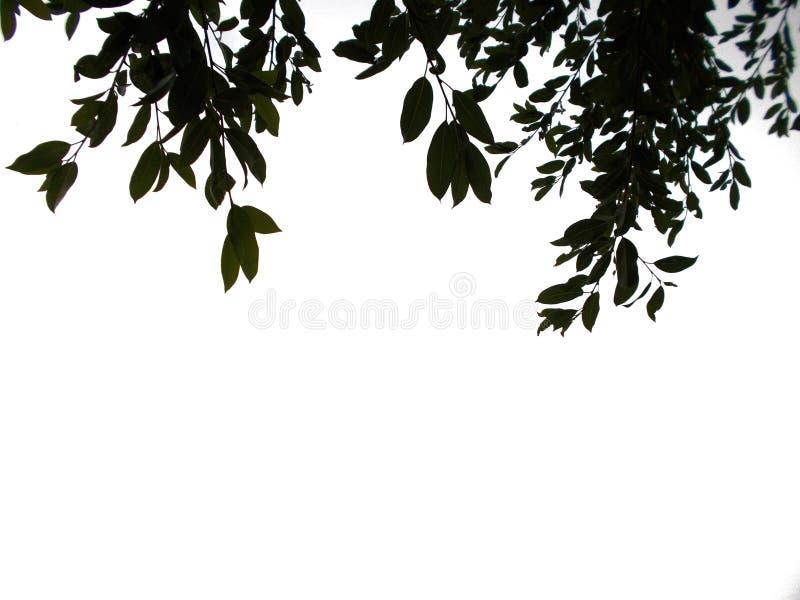 Тропические лист поверх предпосылки стоковые изображения