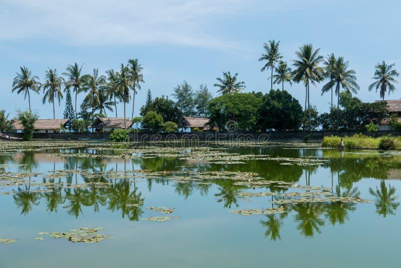 Тропические озеро и пальмы с отражениями воды в Candidasa стоковые изображения rf