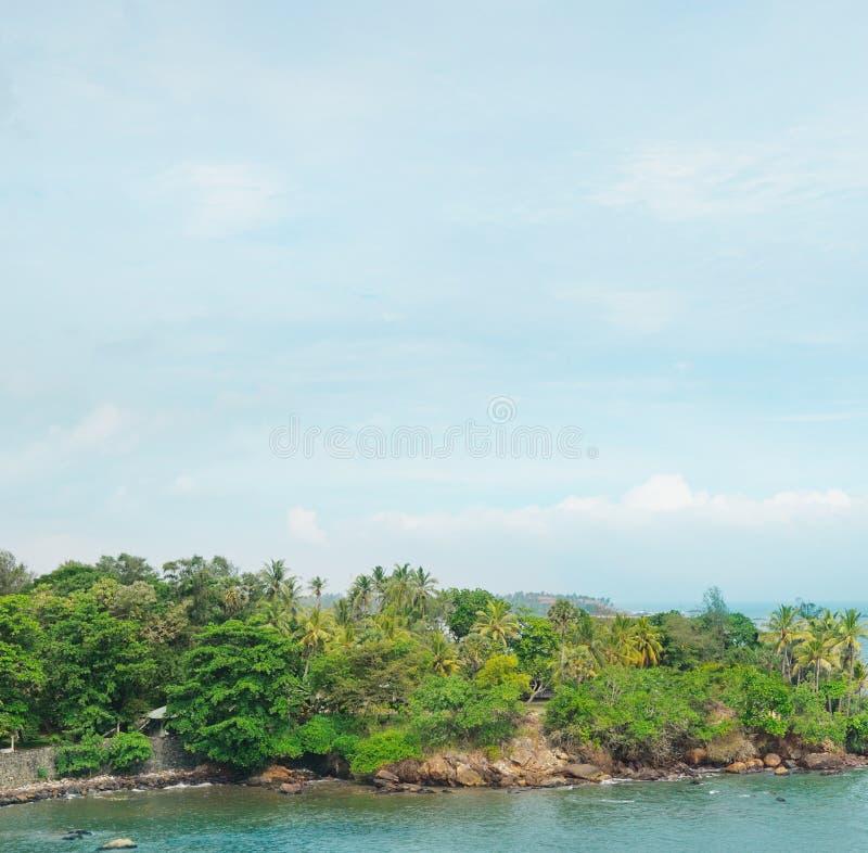 тропические пальмы и waterscape стоковое изображение rf