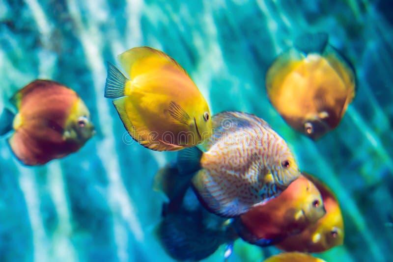 Тропические рыбы с кораллами и водоросли в открытом море Красивая предпосылка подводного мира стоковое фото rf