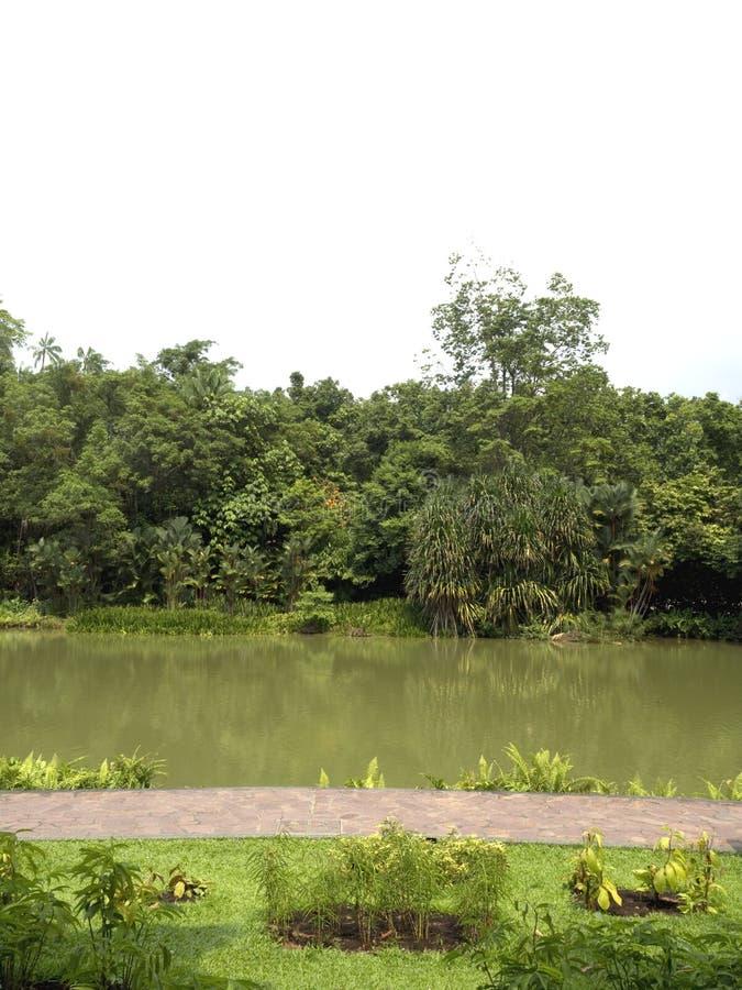 Тропические сады и пруд стоковые фото