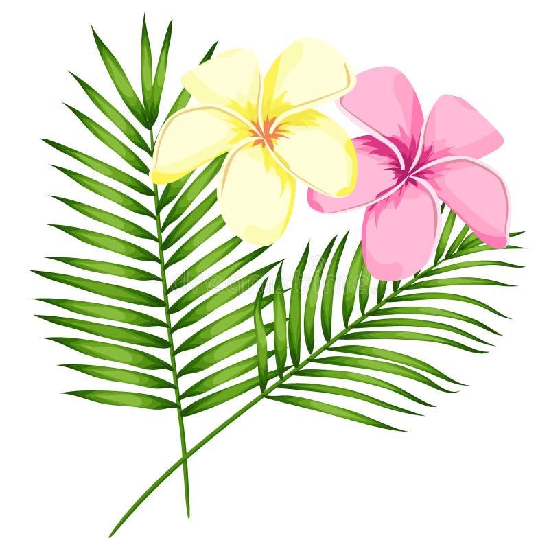 Тропические цветки, ветви и листья plumeria пинка вектора установили для флористической иллюстрации карты Букет цветка с экзотиче иллюстрация вектора