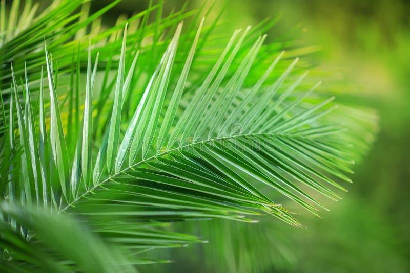 Тропические экзотические листья ладони закрывают вверх в зеленом природном парке стоковые изображения