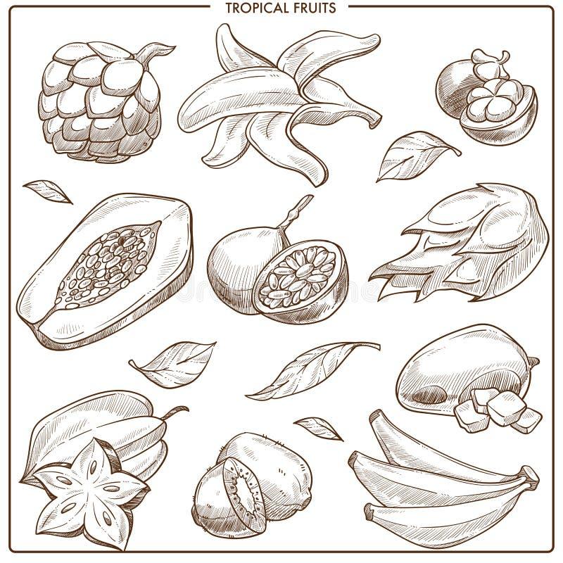 Тропические экзотические плодоовощи эскиза вектора иллюстрация вектора