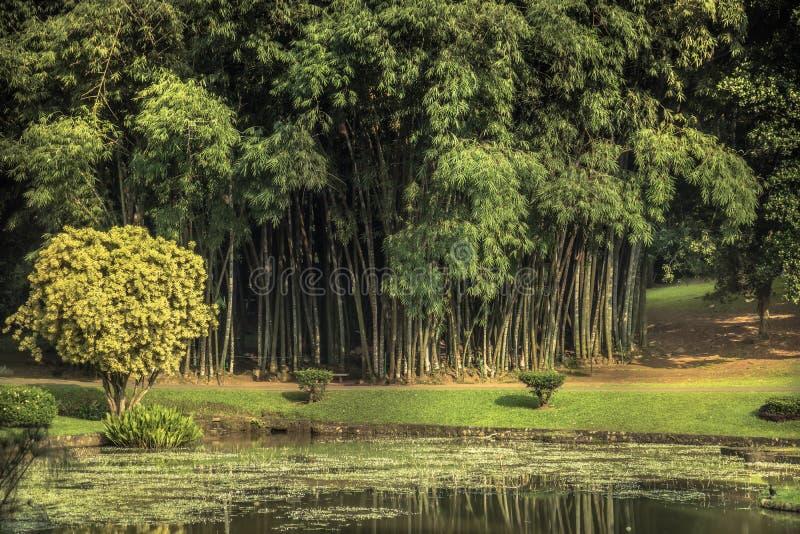 Тропический ботанический сад с бамбуковым пейзажем с дизайном ландшафта в королевском саде Peradeniya в окружать Шри-Ланка близра стоковое изображение