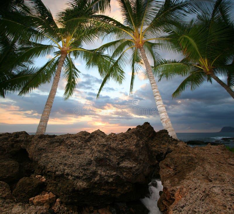 тропический взгляд стоковые изображения rf
