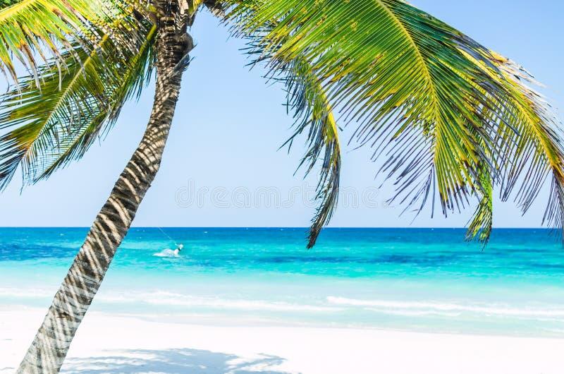 Тропический взгляд и пальмы взморья над морем бирюзы на экзотическом песчаном пляже в карибском море стоковая фотография rf