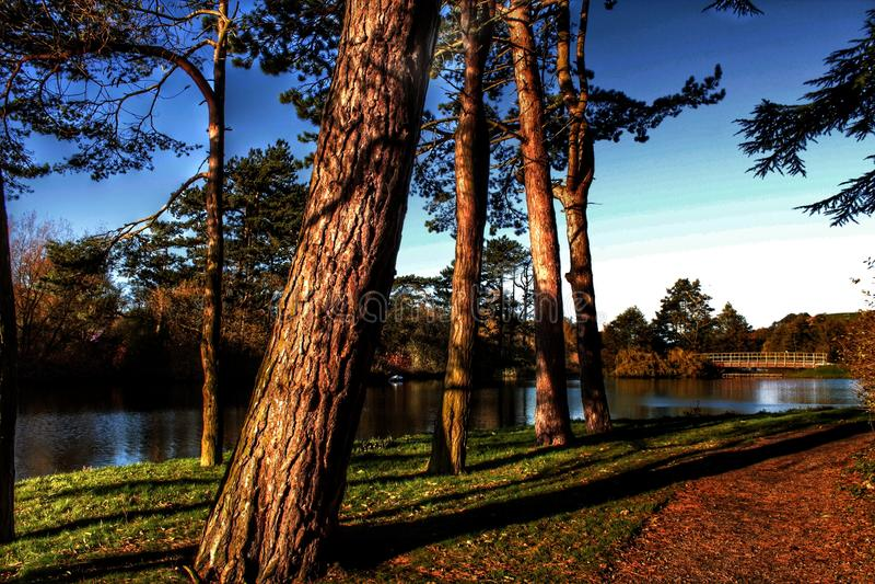 Тропический вид на озеро стоковая фотография rf