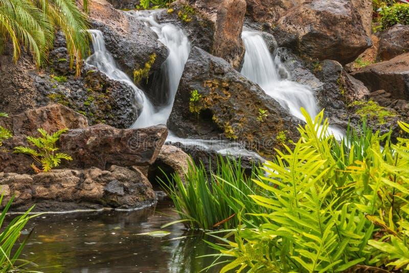 Тропический водопад на Мауи стоковая фотография rf