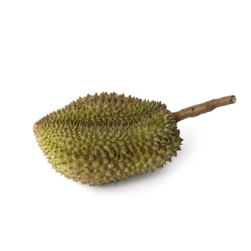 Тропический вонючий плод: Изолят плода дуриана на белой предпосылке стоковые изображения