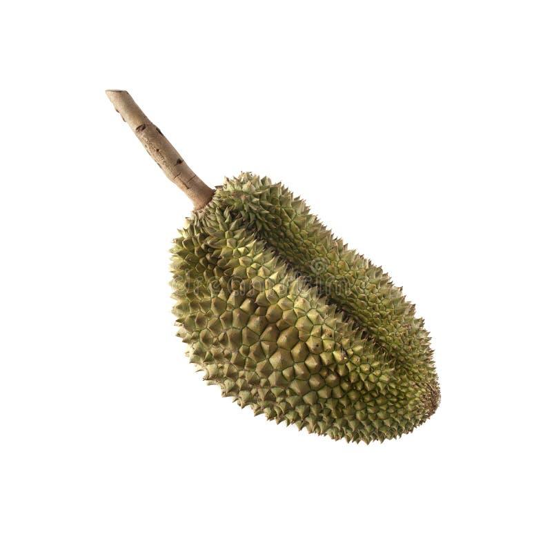 Тропический вонючий плод: Изолят плода дуриана на белой предпосылке стоковая фотография