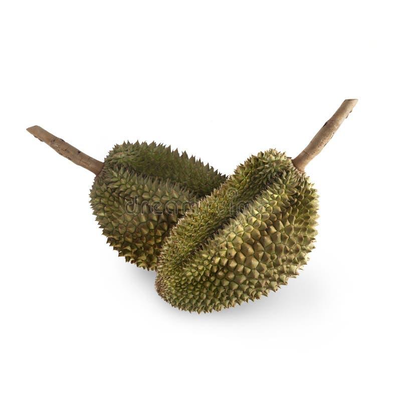 Тропический вонючий плод: Изолят плода дуриана на белой предпосылке стоковое фото
