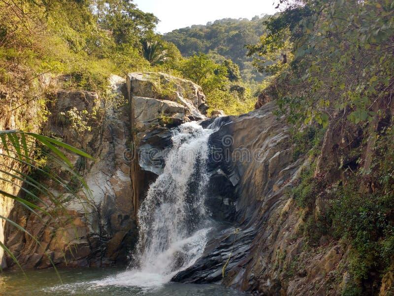 тропический водопад стоковое фото rf