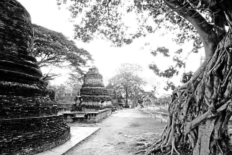 Тропический год сбора винограда комплекса буддийского виска стоковые фотографии rf