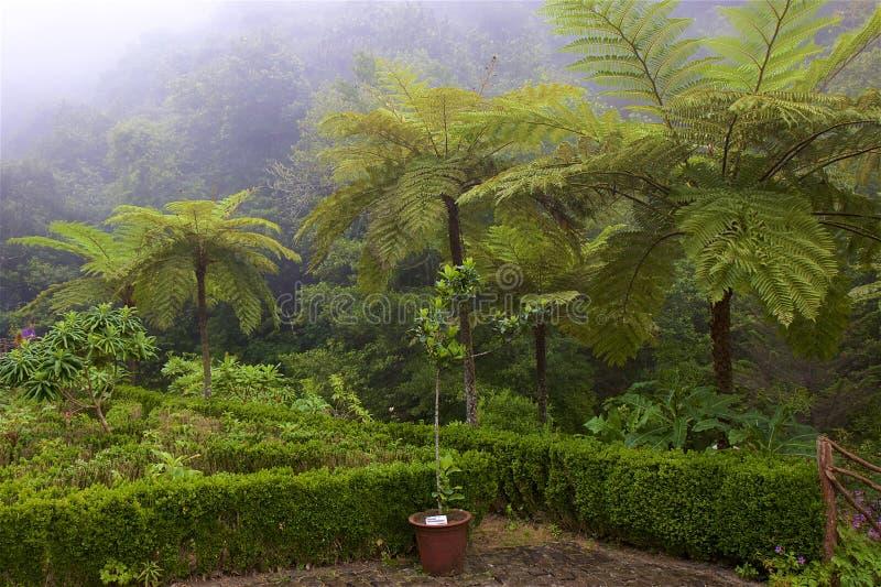 Тропический лес в Мадейре, Португалии стоковые фото