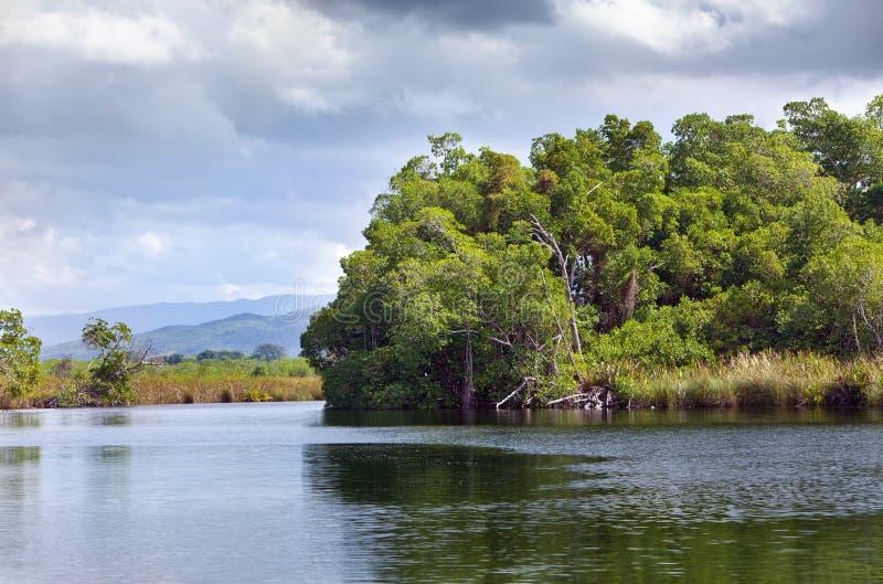 Тропический лес мангровы чащ на черном реке. Ямайка. стоковые фотографии rf