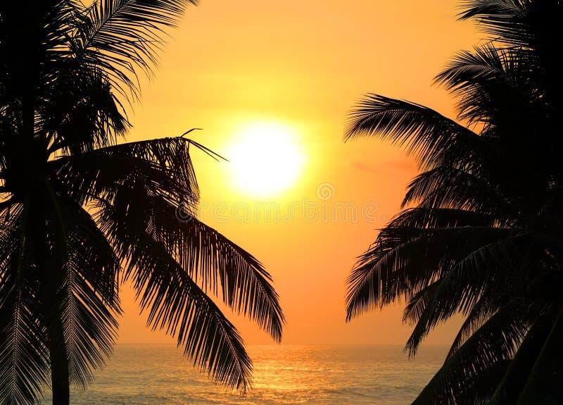 Тропический заход солнца и ладони моря стоковые фото