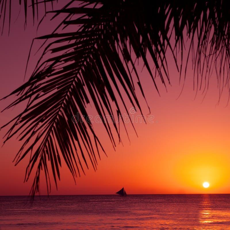 Тропический заход солнца Море, ладонь и солнце стоковые изображения rf