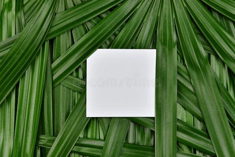 Тропический зеленый цвет выходит предпосылка с бумажным космосом в центр, естественной концепцией экземпляра рамки картины стоковые изображения rf