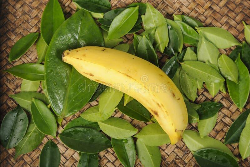 Тропический зрелый банан на зеленых лист стоковое фото