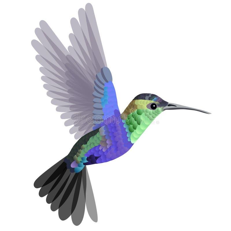 Тропический колибри птицы в зеленоголубых тонах изолированный на белой предпосылке r иллюстрация вектора