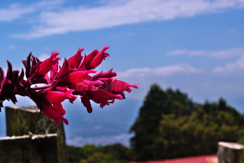 Тропический красный цветок стоковые изображения
