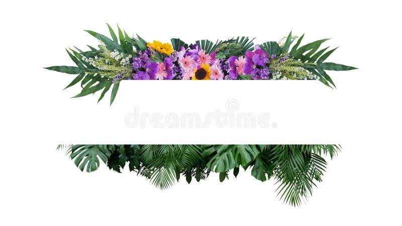 Тропический куст завода листвы листьев с красочным знаменем рамки природы цветочной композиции цветков на белой предпосылке иллюстрация штока