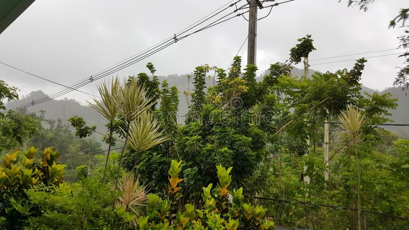 Тропический лес в San Sebastian, Пуэрто-Рико стоковое фото