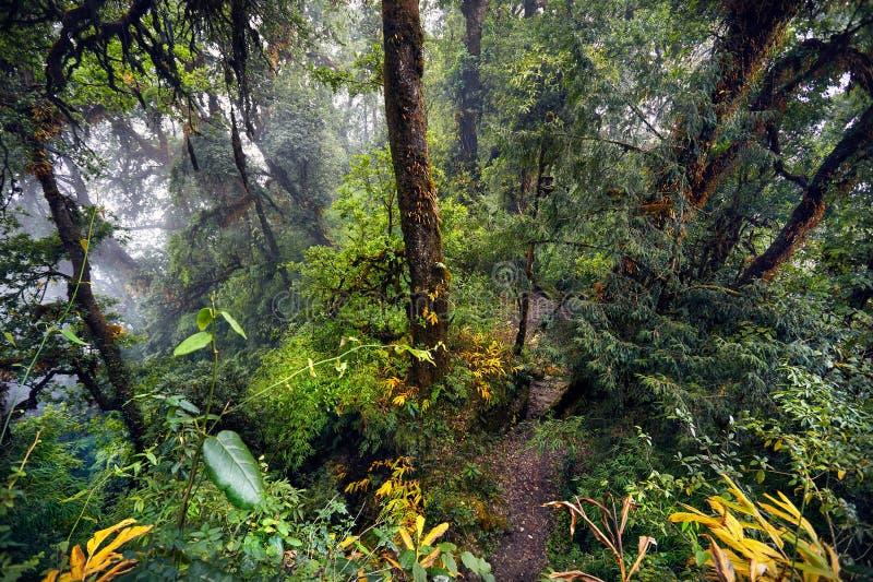 Download Тропический лес Гималаев стоковое изображение. изображение насчитывающей рисуночно - 104036927